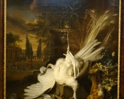 Jan Weenix The white peacock, Tablouri cu paun alb Realizate la Comanda, Reproduceri Picturi