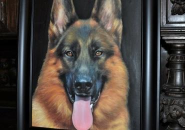 Portret ciobanesc german, tablou cu caine de rasa, tablou cu animale salbatice, tablou