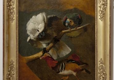 Scoala franceza 1700 Papagal, cocos si rata, Tablou natura moarta, tablou natura statica