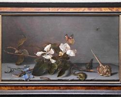 Stilleben, Still Life, Quince Blossom Branch with Shells, Balthasar van der Ast, Tablou natura statica cu ramura cu flori albe, tablou natura moarta cu insecte, tablou cu fluturi si scoica