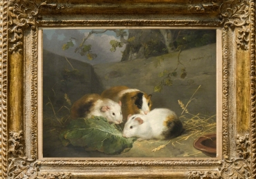 Tablou Peisaj cu Porcusori de Guineea, tablou cu animale salbatice, tablouri cu anim
