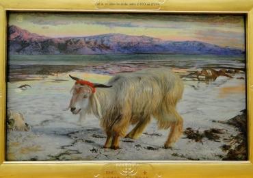 Tablou cu Capra intr-un peisaj de iarna, tablou cu animale salbatice, tablouri cu anim