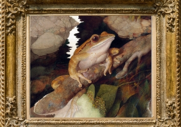 Tablou cu broasca, tablou cu animale salbatice, tablouri cu animale pictate, tablouri c