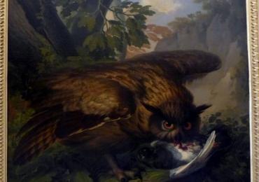 Tablou cu  bufnita vanand un porumbel, tablou cu animale salbatice, tablouri cu anim