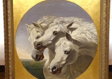 Tablou cu cai albi, tablou cu animale salbatice, tablouri cu animale pictate, tablouri c