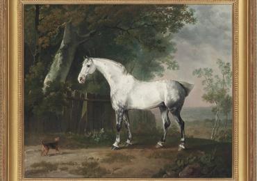 Tablou cu cal alb, tablou cu armasar,  tablou cu animale salbatice, tablouri cu animale