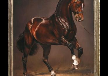 Tablou cu cal arab, paso fino, tablou cu animale salbatice, tablouri cu animale pictate