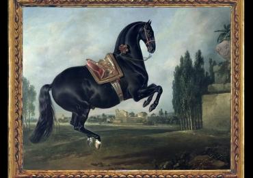 Tablou cu cal rasa Mustang, Black Horse Performing the Courbette, tablou cu animale salbatice