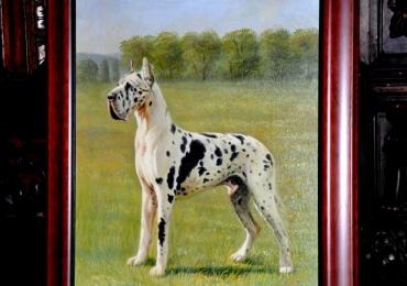 Tablou cu dog german marmorat, tablou cu animale salbatice, tablouri cu animale pic