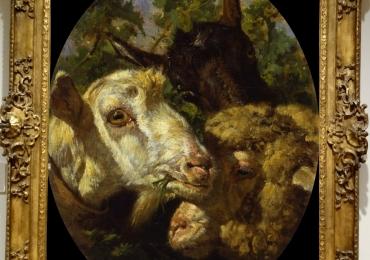 Tablou cu familie de capre, tablou cu animale salbatice, tablouri cu animale pictate, t