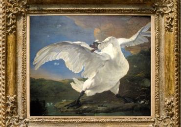 Tablou cu lebada alba, tablou cu animale salbatice, tablouri cu animale pictate, tablou
