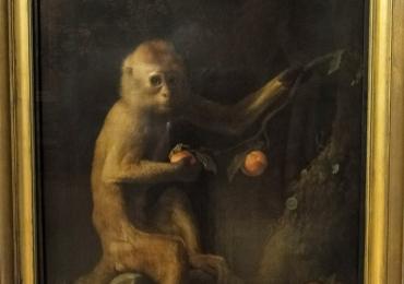 Tablou cu maimuta mancand piersici, tablou cu animale salbatice, tablouri cu animal