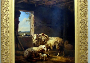 Tablou cu oi, tablou cu animale salbatice, tablouri cu animale pictate, tablouri cu ani
