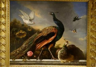 Tablou cu paauni si pasari exotice,  tablou cu animale salbatice, tablouri cu animale p