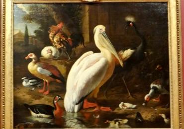 Tablou cu pasari din delta, tablou cu animale salbatice, tablouri cu animale pictate, ta