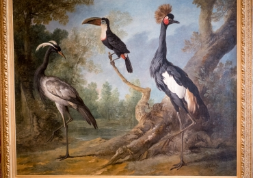 Tablou cu pasari exotice in peisaj de vara, tablou cu animale salbatice, tablouri cu ani