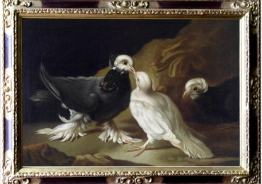 Tablou cu pasari, tablou cu porumbei, tablou cu animale salbatice, tablouri cu animal