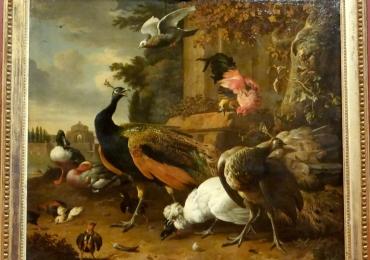 Tablou cu pasari, tablou cupasari salbatice, tablouri cu animale pictate, tablouri pasar