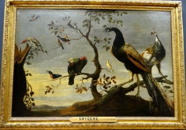 Tablou cu pauni, papagali si pasri exotice, tablou cu animale salbatice, tablouri cu an