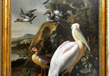 Tablou cu pelican si alte pasari de Delta, tablou cu animale salbatice, tablouri cu anim