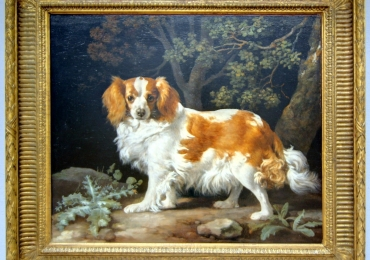 Tablou cu pichinez imperial, tablou cu animale salbatice, tablouri cu animale pictate,