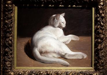 Tablou cu pisica alba, tablou cu animale salbatice, tablouri cu animale pictate, tablou