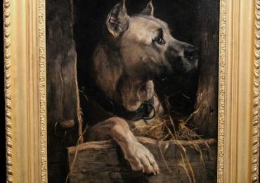 Tablou cu portret de cane corso gri tablou cu animale salbatice, tablouri cu animale p