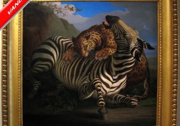 Tablou cu zebra vanata de un tigru, tablou cu animale salbatice, tablouri cu animale p