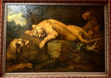 Tablou lei, tablou cu animale salbatice, tablou cu animale exotic